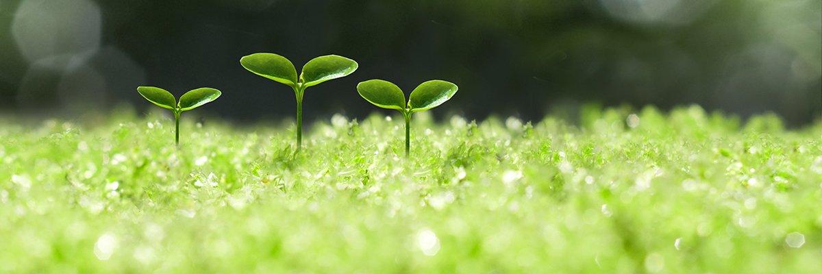 startup-new-business-plants-fotolia.jpg