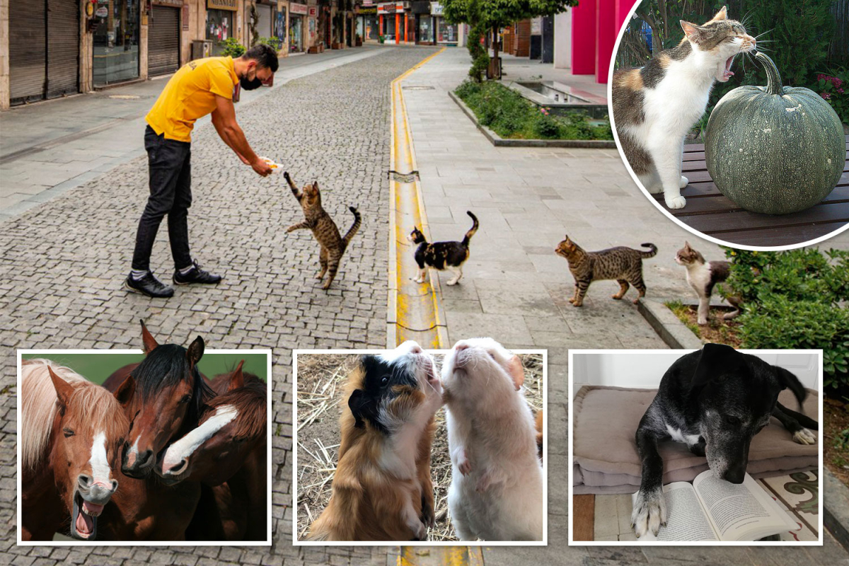 tp-composite-pets.jpgstripallquality100w1200h800crop1.jpeg