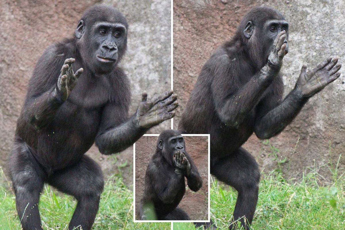 TM-comp-gorilla.jpgstripallquality100w1200h800crop1.jpeg
