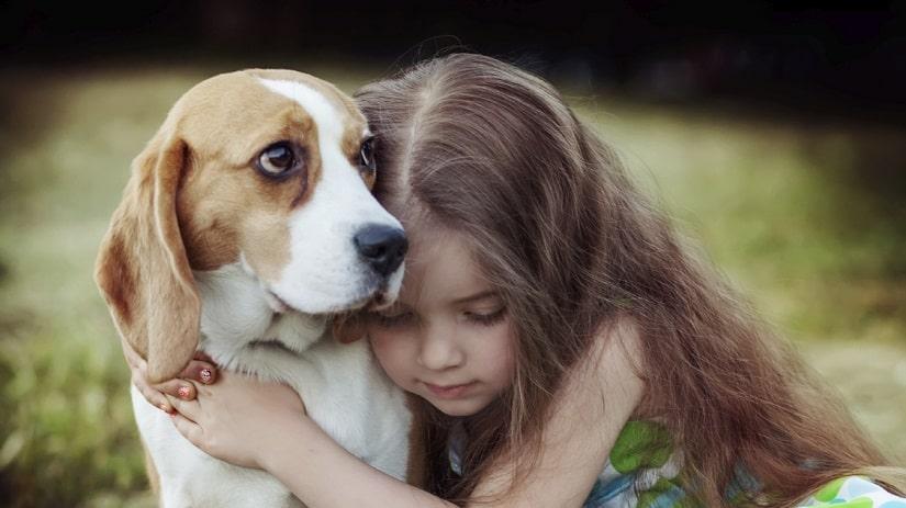 problèmes de comportement du chien