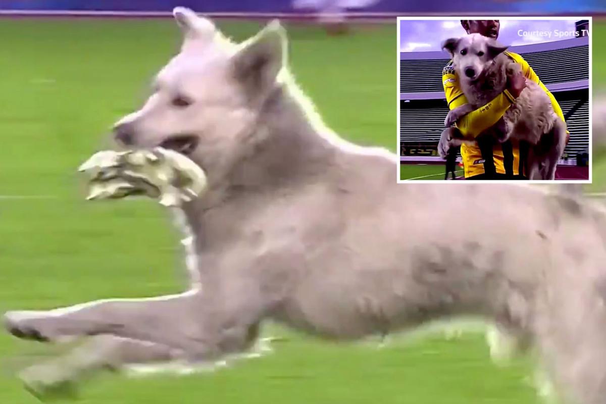 gs-soccer-dog-bolivia-comp.jpgstripallquality100w1200h800crop1.jpeg