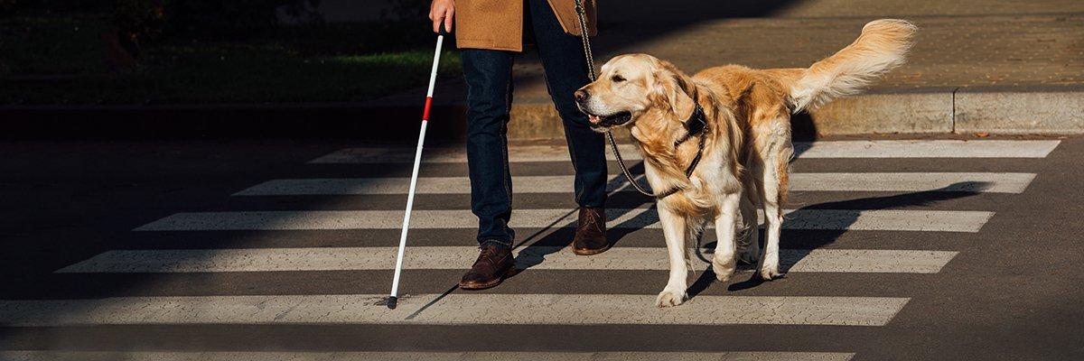 guide-dog-blind-lightfieldstudios-adobe.jpg
