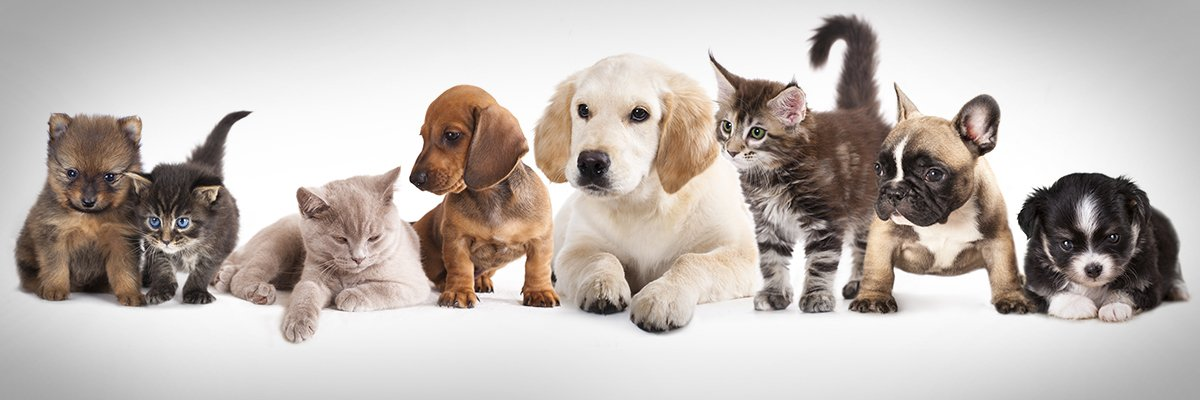 pets-cats-dogs-adobe-hero.jpg