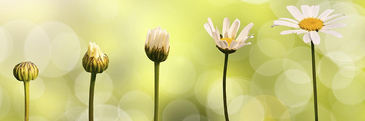 flower-nature-growth-2-adobe.jpeg