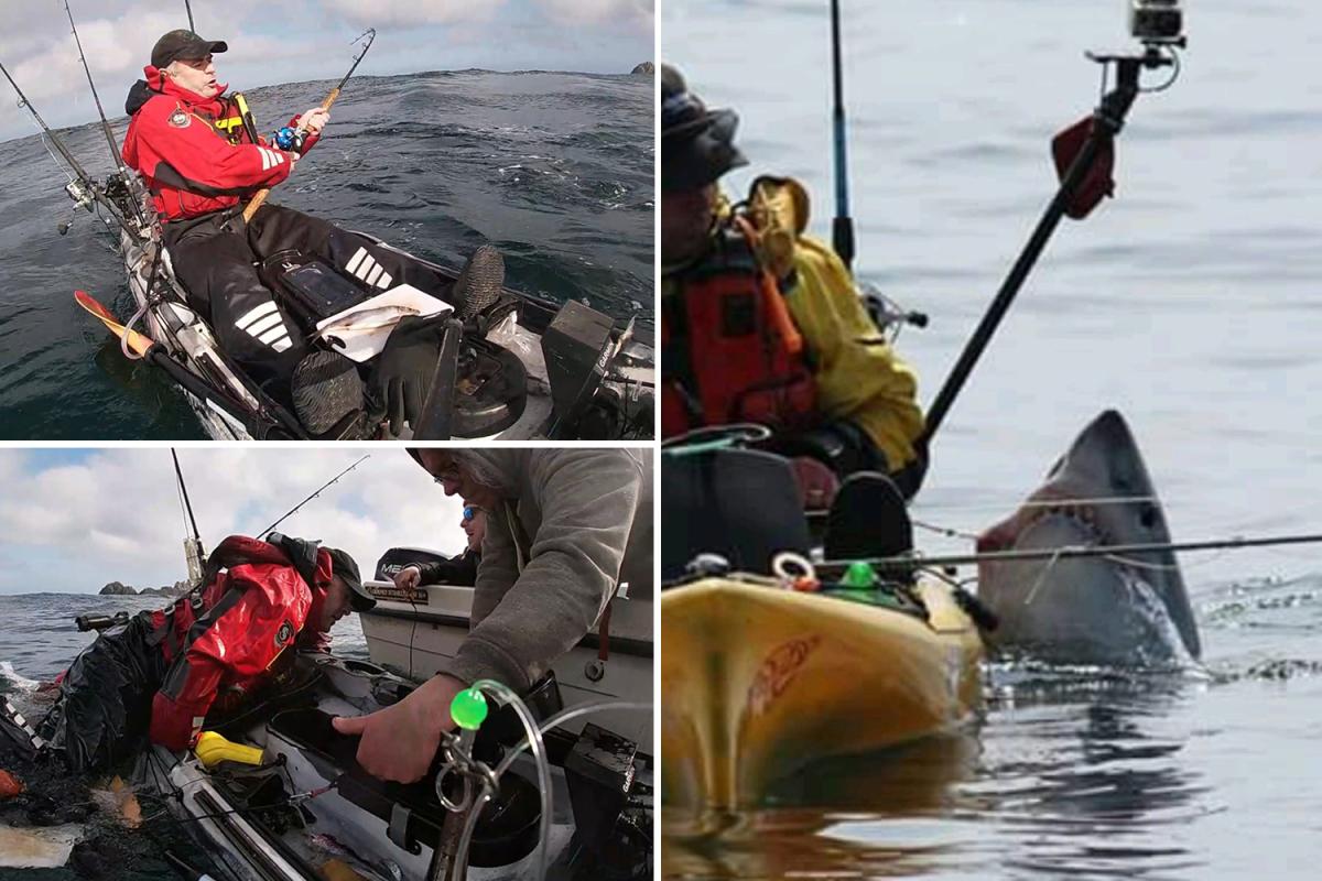 sp-shark-boat-comp.jpgstripallquality100w1200h800crop1.jpeg
