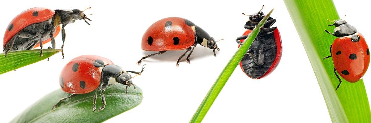Ladybirds-hero-AdobeStock_277096759.jpg