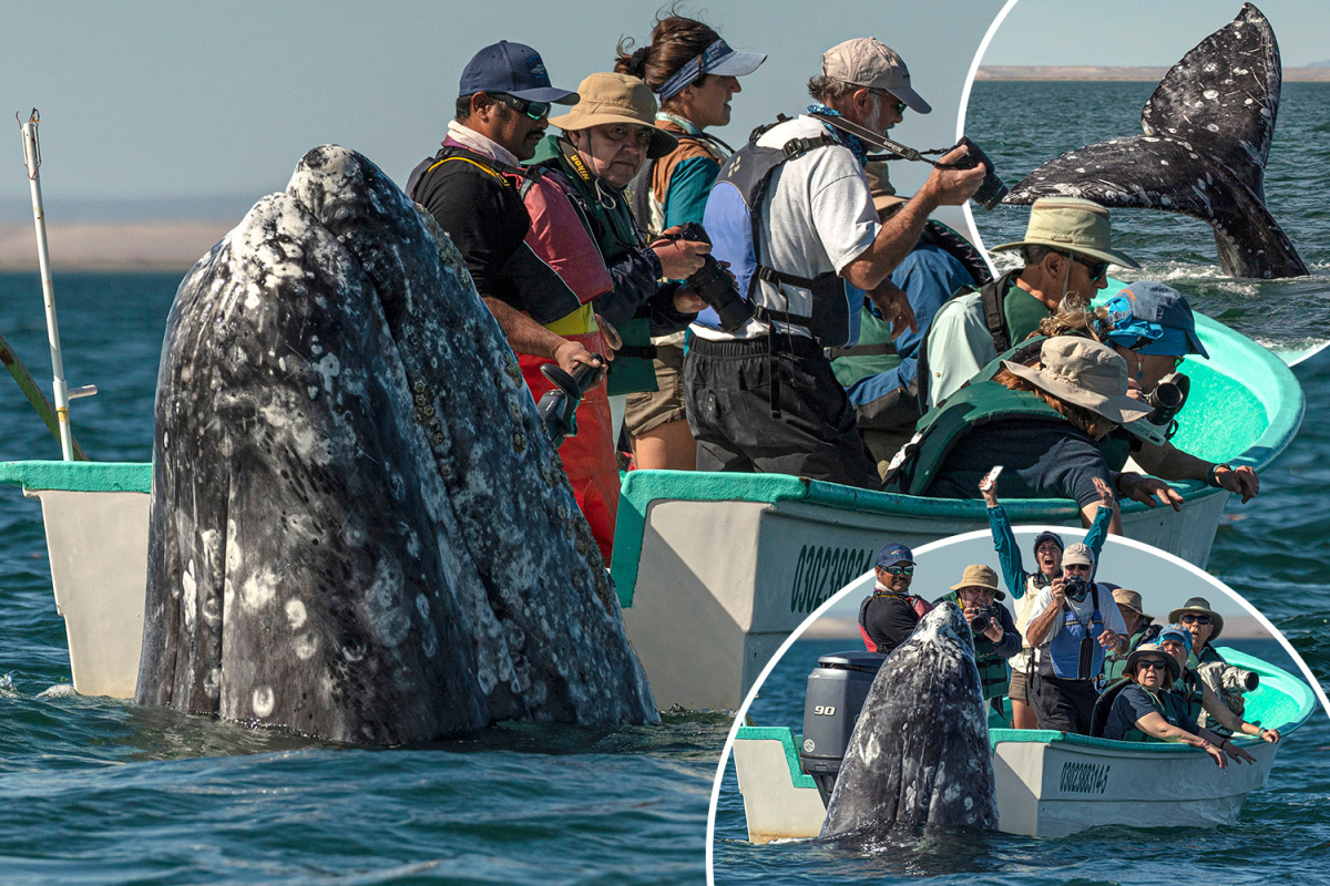 dk-comp-whale-1.jpgstripallquality100w1200h800crop1.jpeg