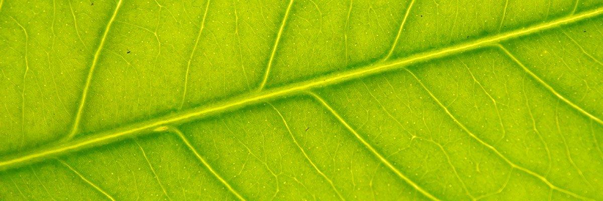 leaf-nature-growth-adobe-1602503137307.jpeg