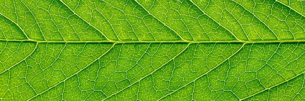 leaf-nature-growth-2-adobe.jpeg